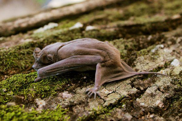 O zmierzchu nietoperze budzą się by się napić, zjeść i uczyć młode przetrwania